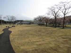2018sakura